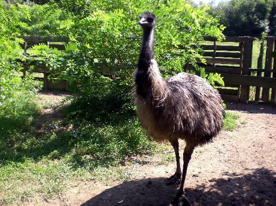 Charlestown, RI: Emu!