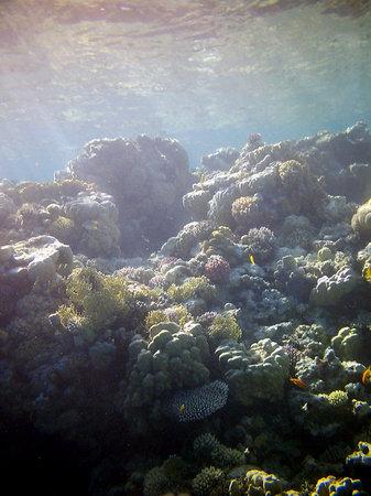 دايف أرج: Stunning Corals