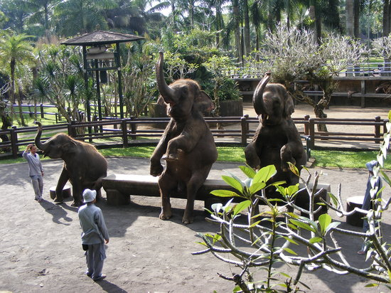 Elephant Safari Park & Lodge : Elephant show