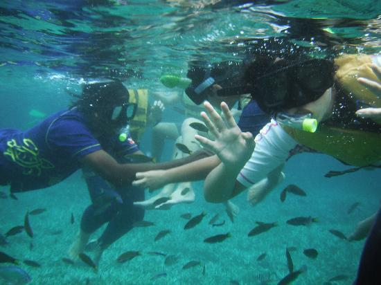 Redang Kalong Resort : Swimming with the fishes