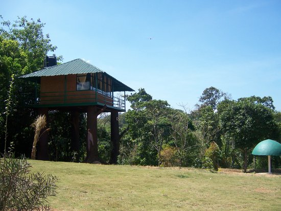 Eletaria Resort & OYO Rooms: One of the Tree houses