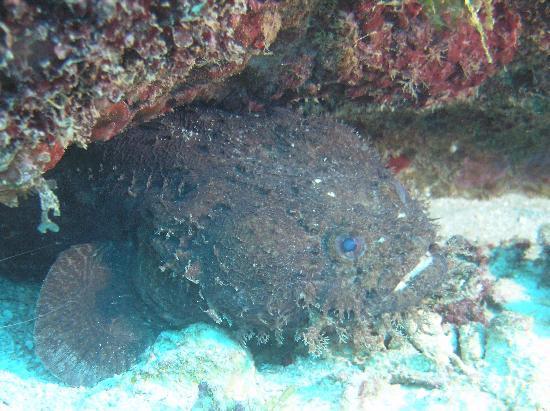 فانتاسي أيلاند ريزورت بيتش آند مارينا: Frog Fish