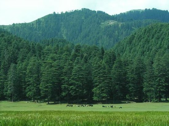Khajjiar, Indien: The lush green field