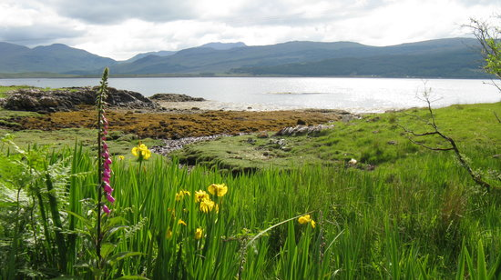 Pulau Mull, UK: Wild Flowers abound