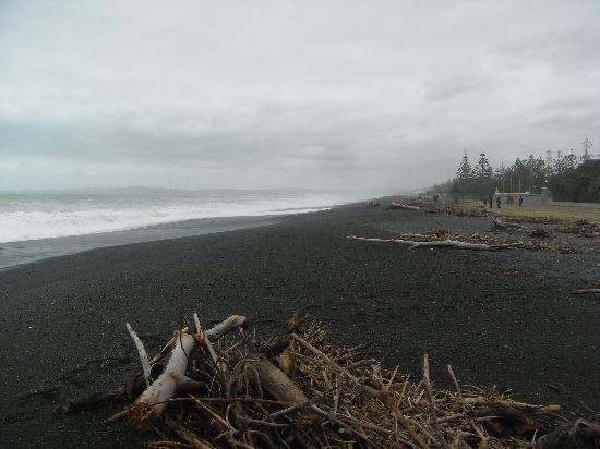 الباتروس موتل: Napier Beach