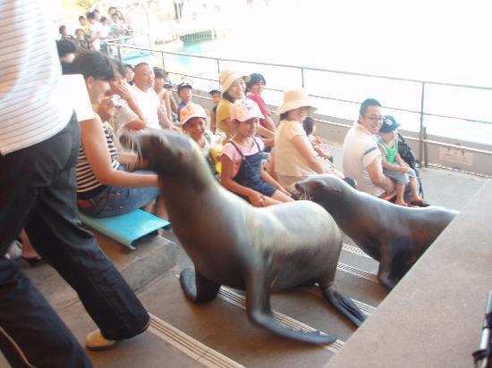 Minami Chita Beach Land: 観客席まであいさつにくるアシカ