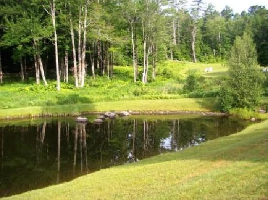 Trumbull House Bed and Breakfast : Fish pond & back yard
