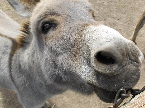 Moncton, Canada: Donkey at Zoo