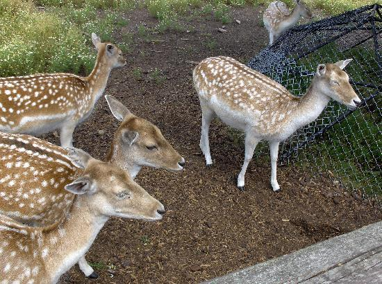 Moncton, Canada: Deer you could hand feed.