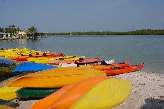 Naples Kayak Company: Napes Kayak Company Johnson Bay