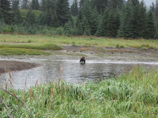 Anchor River Lodge: fishing with the bruins. Silver Salmon Creek
