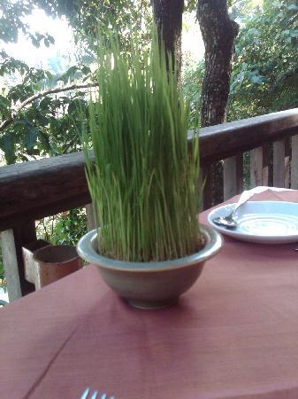 Komaneka at Bisma: Rice growing on our table at breakfast