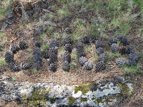 "Avgonima All Seasons Hotel: I gathered pine cones; I formed ""Chios"""