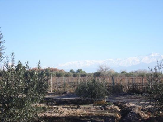 TikayKilla Lodge & Wines: Nice to walk nearby: vineyards, olive trees and the mountains
