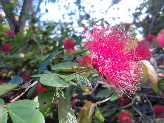 Botanic Garden Ubud: Botanic Garden 1