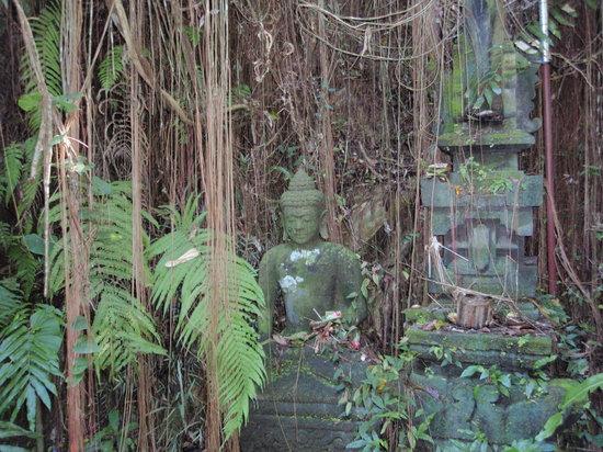 乌布植物园