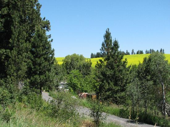 Pullman, WA: View of rolling hills on bike path between Moscow, ID and Troy, ID