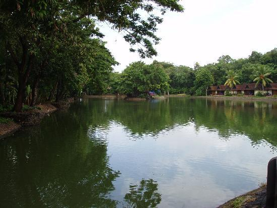 Vivanta by Taj - Kumarakom : Lake !