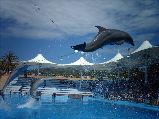 Calvià, España: dolphin show