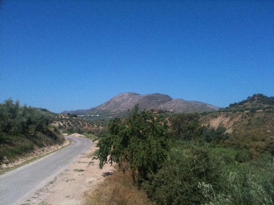 Casa Olea : Olive groves as far as the eye can see