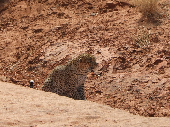 F. King Tours and Safaris - Day Tours: Leopard