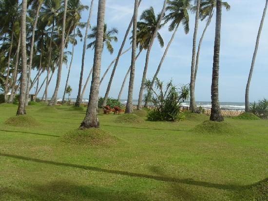 Serene Pavilions: Gardens and beach