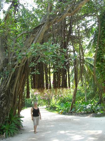 Kuramathi: eine grüne Insel
