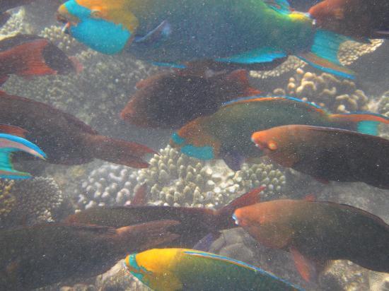 Kuramathi: Fischreichtum