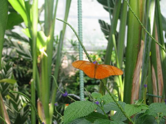 Niagara Parks Sommerfuglobservatorium: butterfly
