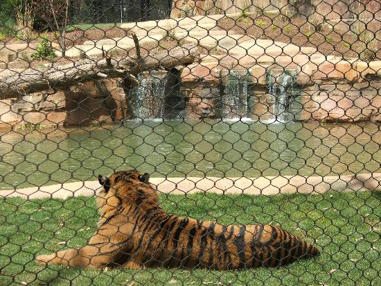Jackson Zoo: New Tiger Exhibit