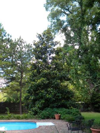 Tante Huppe: Beautiful Magnolias at the pool