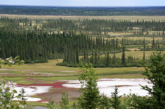 Wood Buffalo National Park: Salt Plains Overlook