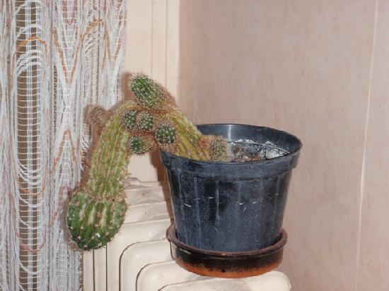 Le Moulin de Provence : même le cactus du hall semble maltraité