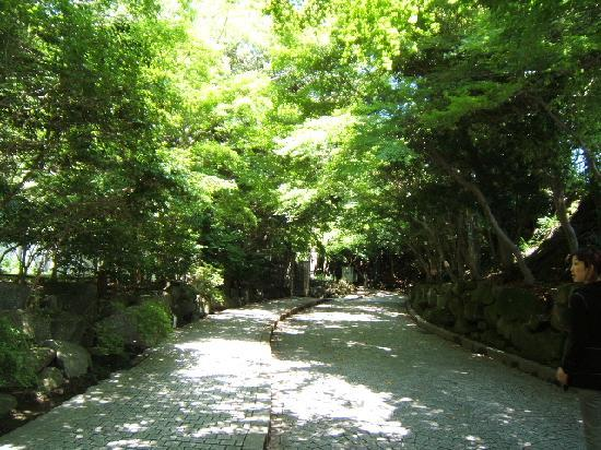 Kamakura Museum of Literature: 文学館へ続く道 木漏れ日の中を歩くのが素敵ですね