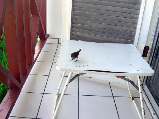 Cherry Tree Apartments: Mein Esstisch auf dem Balkon