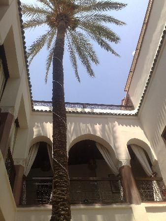 Zamzam Riad: The ZamZam's courtyard palm - brilliant to practice yoga underneath!