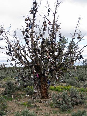 Alfalfa, Oregón: Shoe Tree - just east of Bend, Oregon
