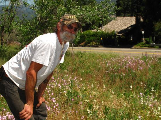 Pine Rose Inn: Bill (Yosemite Sam) showed us the wildflowers across the road before we left for the Tioga Pass.