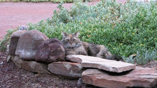 Fire Water Lodge: Feather the Cat, tempermental but friendly