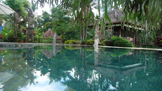 Villa Orchid Bali: Pool