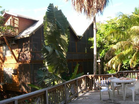 Sundancer Cabanas Roatan Beach Front: a vew of our cabana from the pool. we are on the bottom