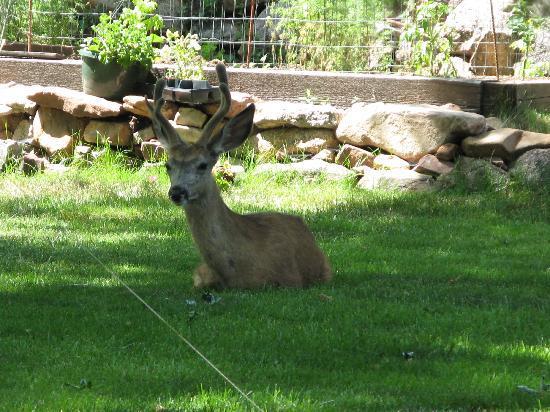 Boulder, Κολοράντο: Local residents!