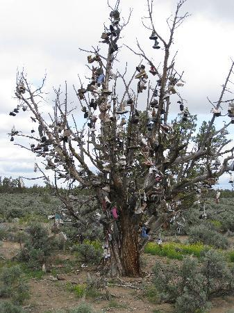 Crooked River Scenic Drive: Shoe Tree - near Alfalfa,  loop route from Crooked River