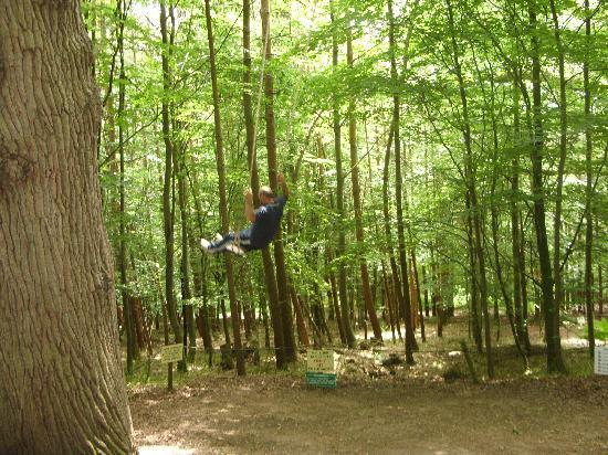 Groombridge Place Gardens: swing in the forest