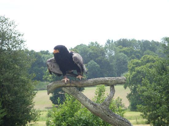 Groombridge Place Gardens: rescued bird