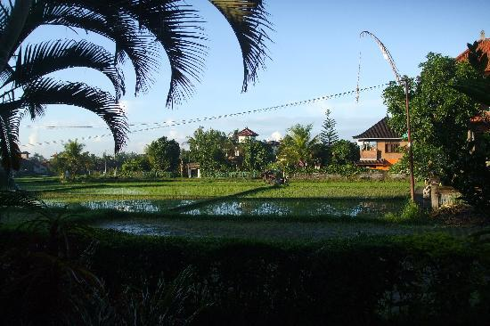 Ina Inn Bungalows: View of the rice paddies from our room