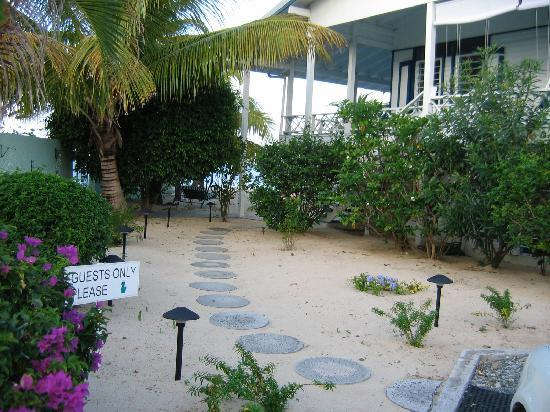 The Horny Toad Guesthouse: Walkway