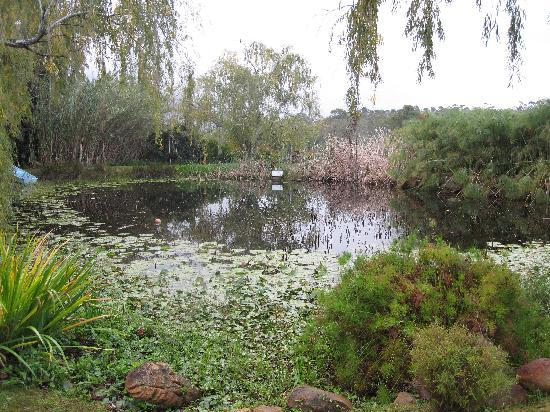 Rothman Manor: pond on the property