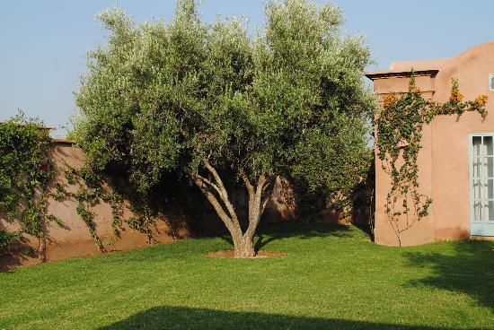 Villa d'Akhdar: Le jardin de jour
