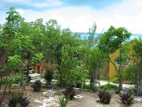 Shannas Cove Resort: Some of the plantings